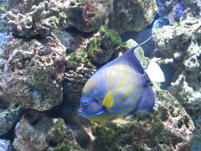 Schöner Fisch